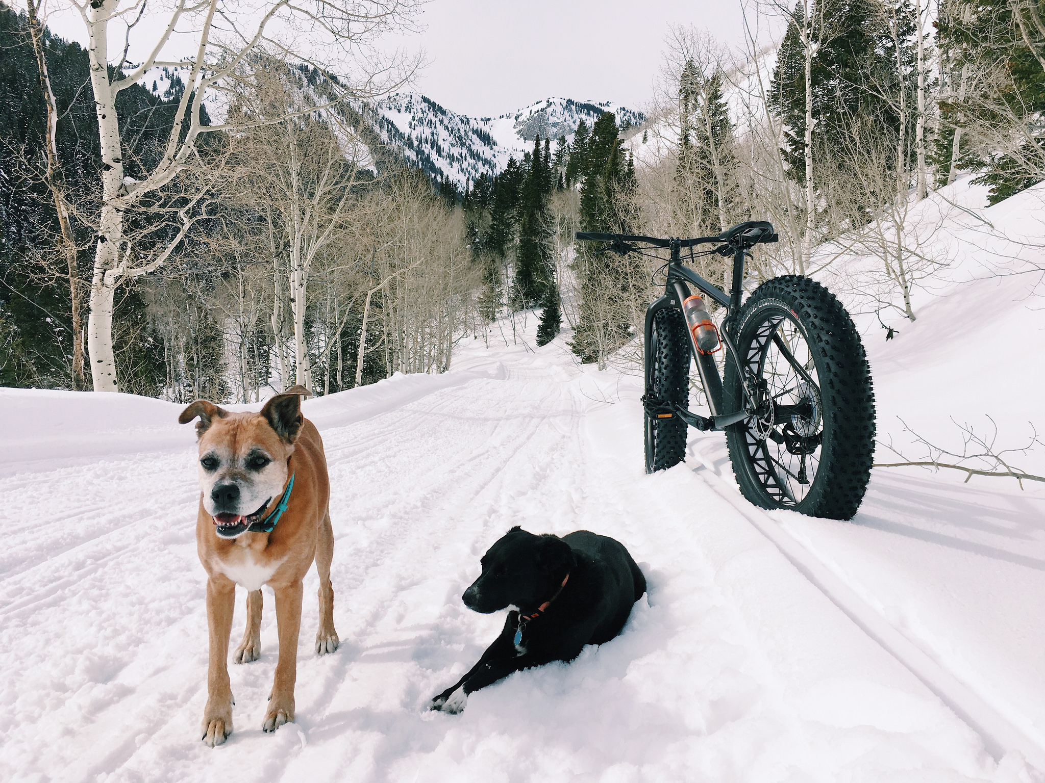 Fat Biking With Dogs